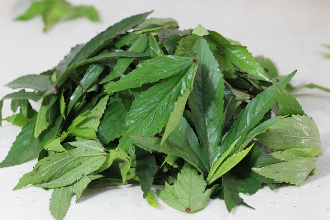 gongura leaves swasthis recipes
